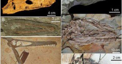 Hallan fósil de tortuga del periodo Jurásico en China