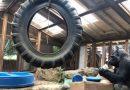 Muere 'Koko', gorila que sabía lenguaje de signos