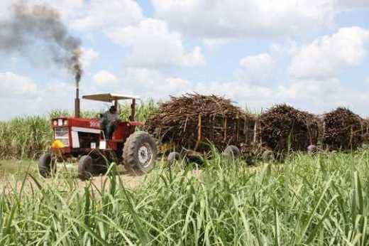 Científicos cubanos y alemanes crean plaguicida ecológico