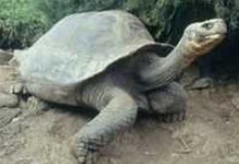 Recuperan población de tortuga gigante en el Amazonas brasileño