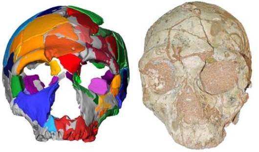 El 'Homo sapiens' no africano más antiguo era griego