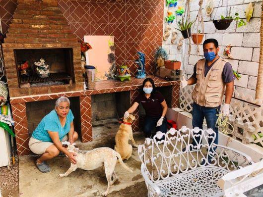 Inician campaña de esterilización canina en playa Miramar
